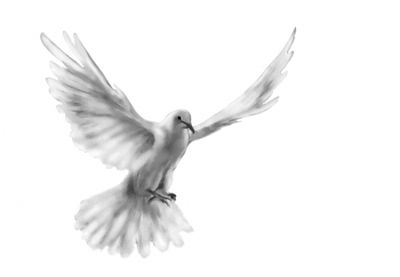 Dove_flying