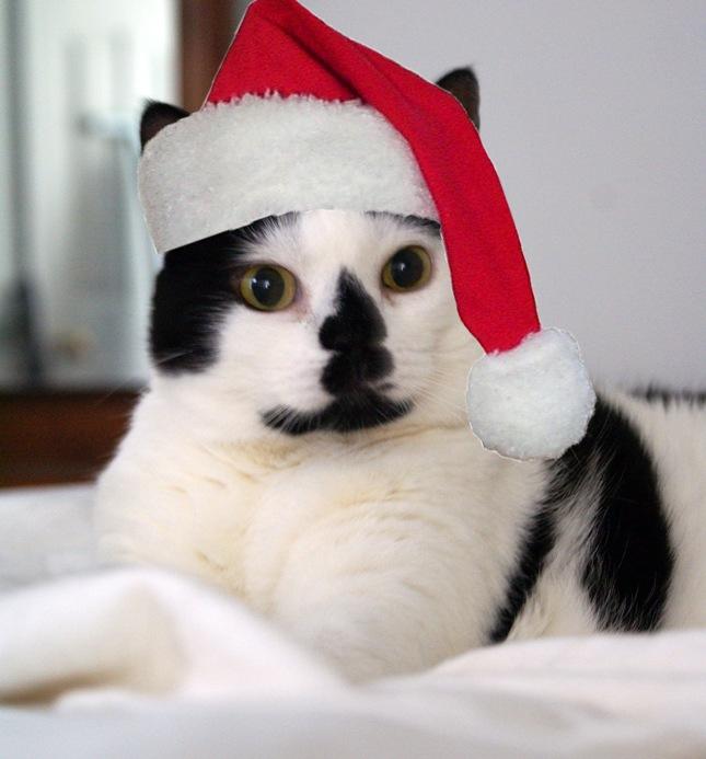 Elsie Fallulah Graves_Top Cat_Santa copy_Small