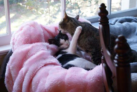 Mazie Bathin' her Baby 2